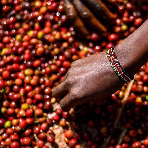Kenya AB Kamundu 1 Kilo