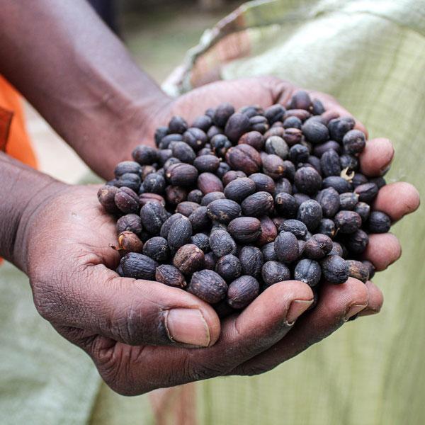Uganda Waninda Budada 250g