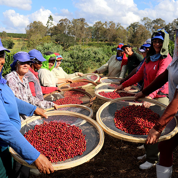 Brazil Fazenda Samambaia